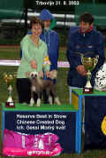 Gessi won also BIS club show for Toy breeds in this show!!! Thanks Mr. Zidar!
