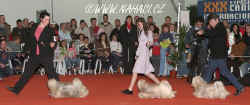 Lhasa apso breeders group