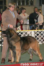 BIG II. Leonberger...