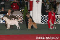 Puppy final competition...