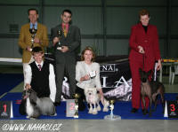 BEST IN SHOW - Club show KCHN (173 dogs) - BIS Chinese Crested Dog Powder Puff Ch. Oliver Modry kvet, owner Libuše Brychtova, judges: Hans v.d. Beg (NL) + Tino Pehar (CRO). Many thanks for judging!